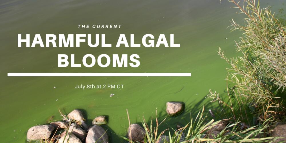 The Current Webinar: Harmful Algal Blooms