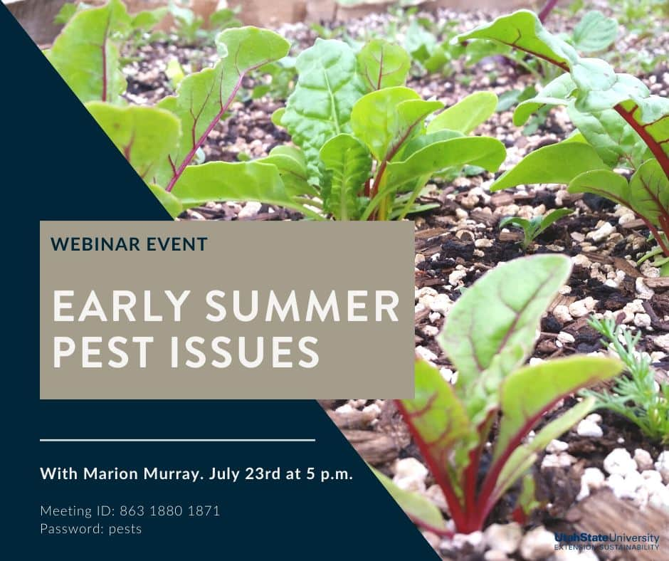 Early Summer Pest Issues