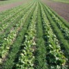 Benefits Of Using Cover Crops