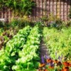 Starting A Vegetable Garden Is Farming & What To Do